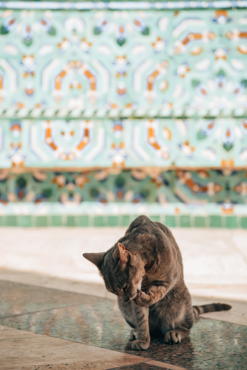 Casablanca Sehenswürdigkeiten Tipps