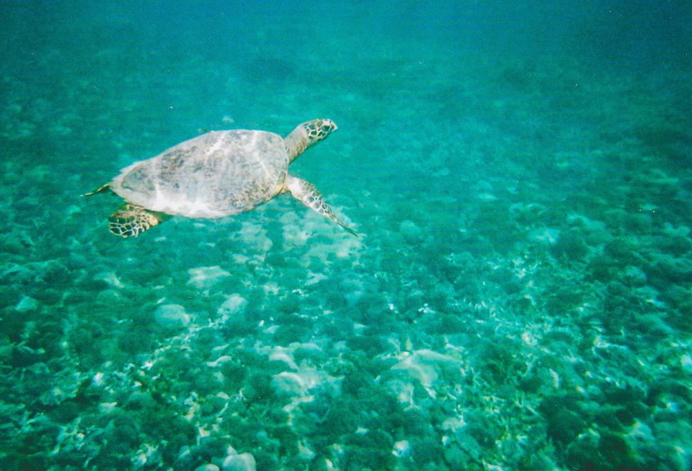 Gili-Island-Turtle