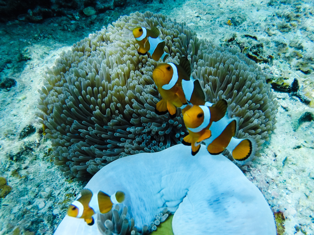 Perhentian Kecil Nemo