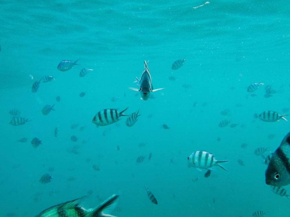 Perhentian Inseln Schnorcheln