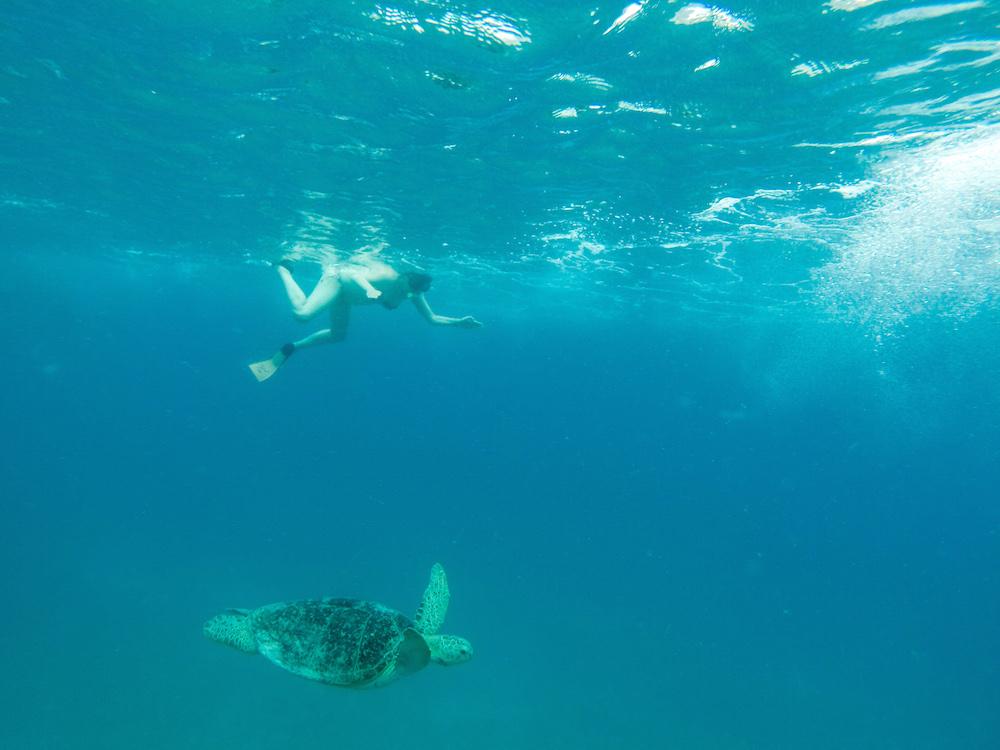 Perhentian Kecil Schildkröte
