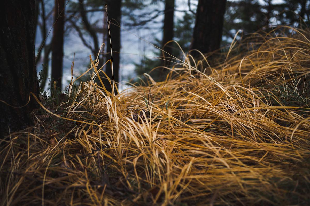 Getrocknetes-Gras-Berg