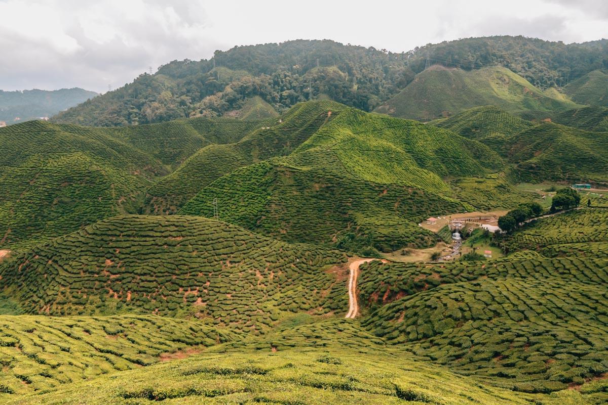 Cameron-Highlands-Teeplantagen-12