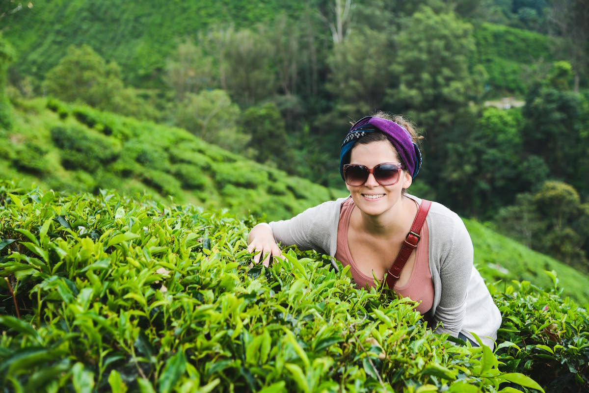 Cameron-Highlands-tea-plantations-Boh
