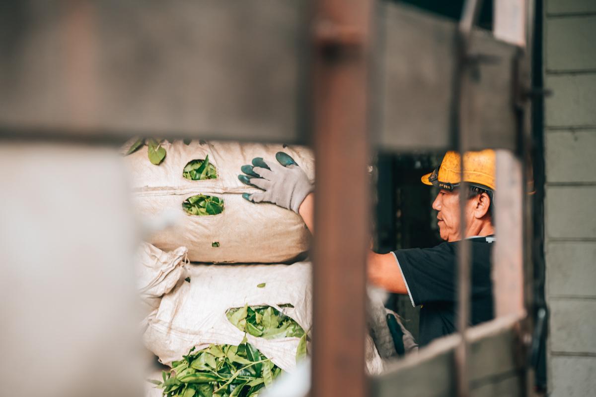 Cameron-Highlands-Teeplantagen-Boh-Arbeiter