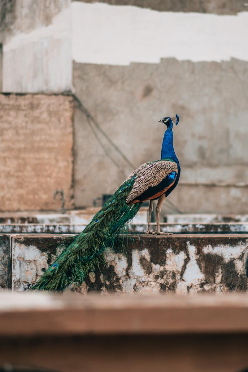 Jaipur Indien Tipps