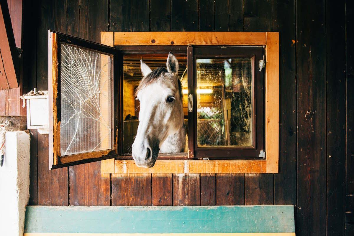 pferd-schaut-aus-dem-fenster