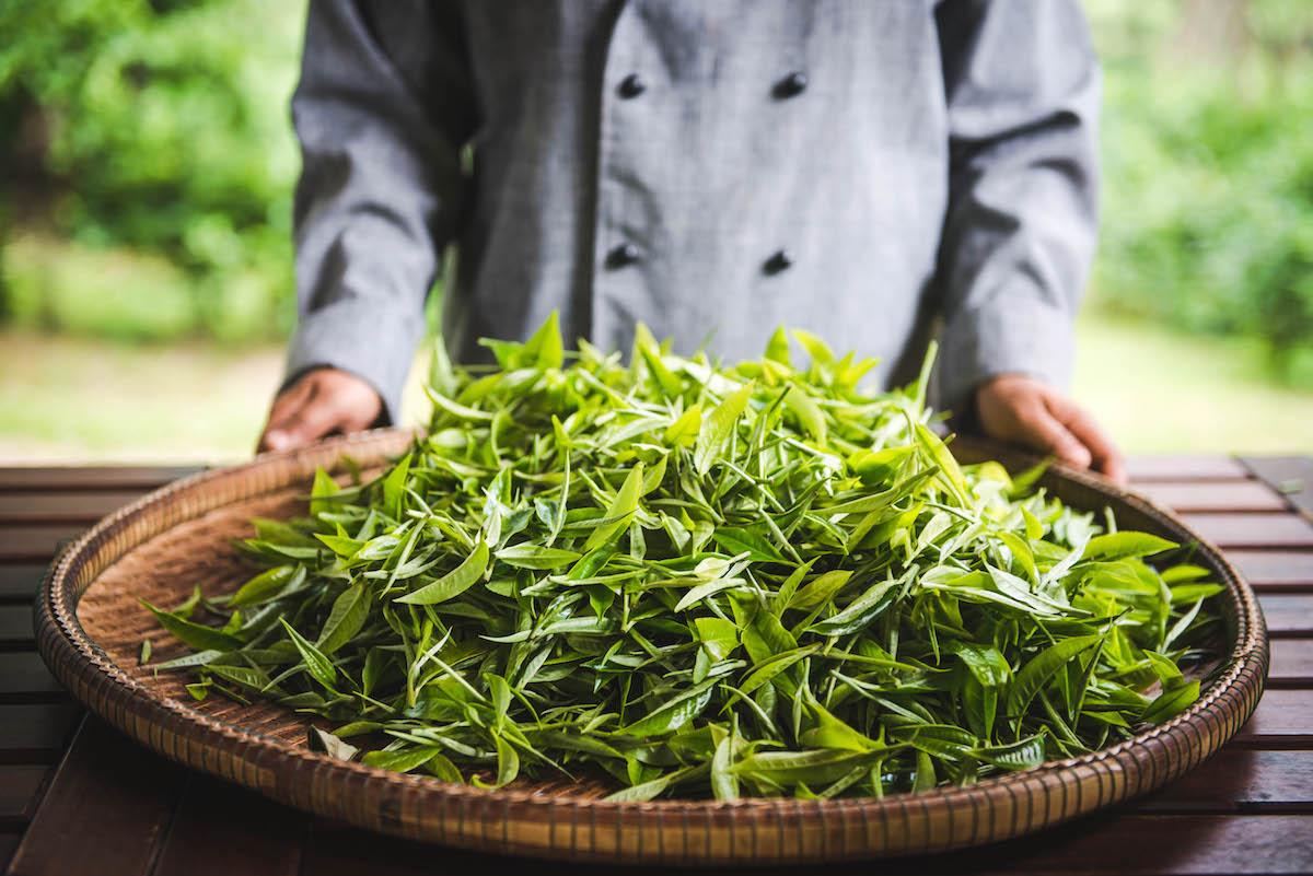 teeplantage-araksa