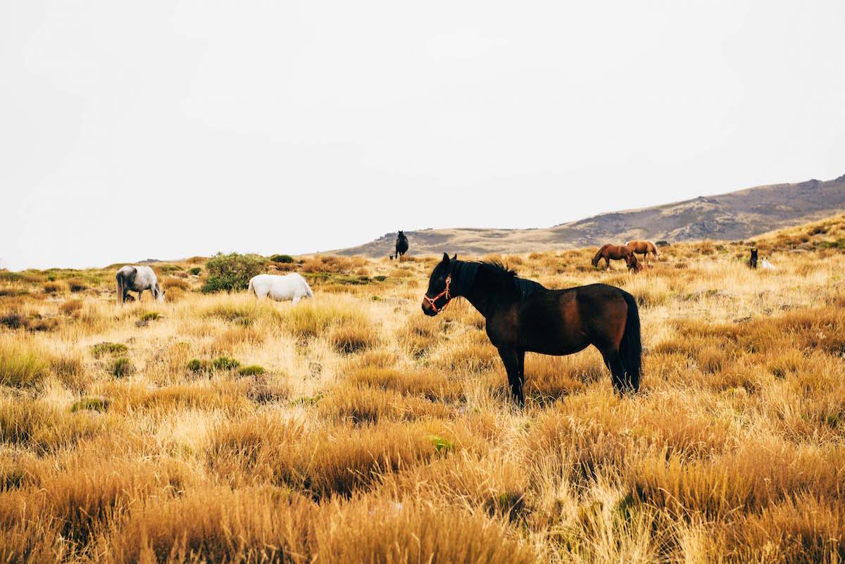 sierra-nevada-wilde-pferde