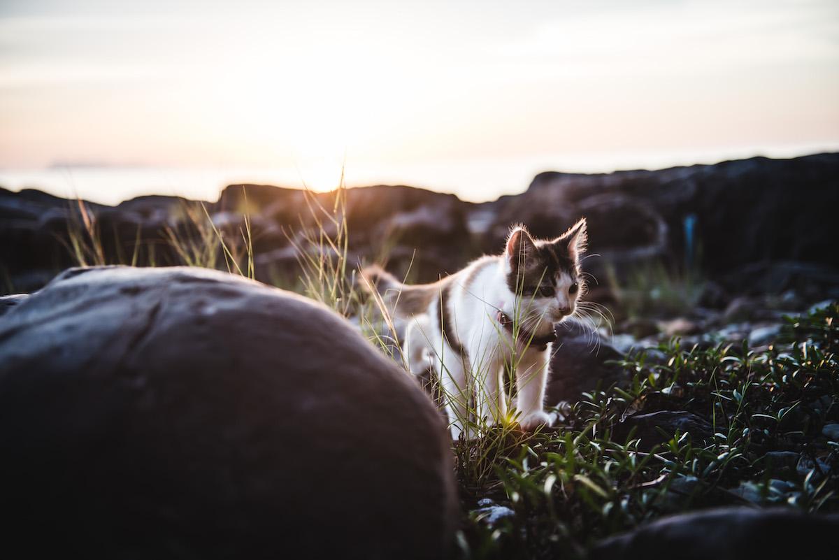 Tips Sunset Koh Samui