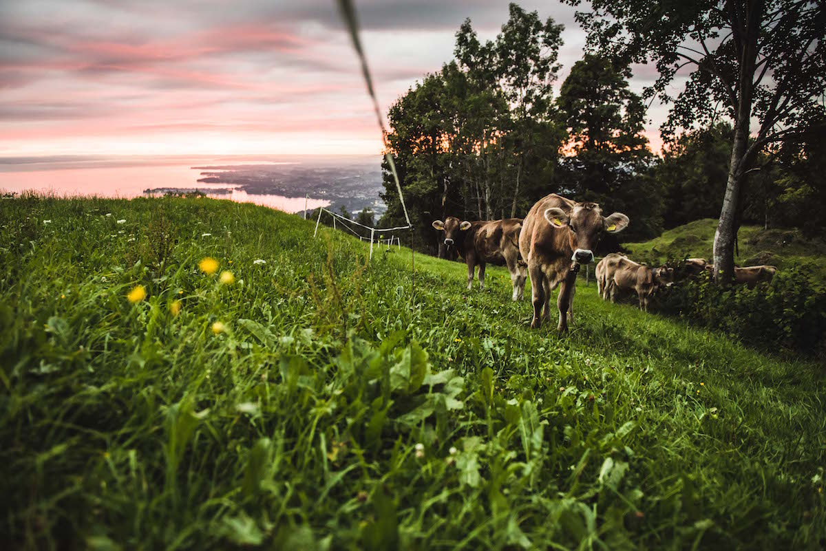 Sonnenuntergang Fritsch am Berg