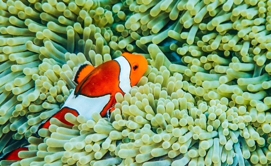 Unterwasserwelt Surin Inseln