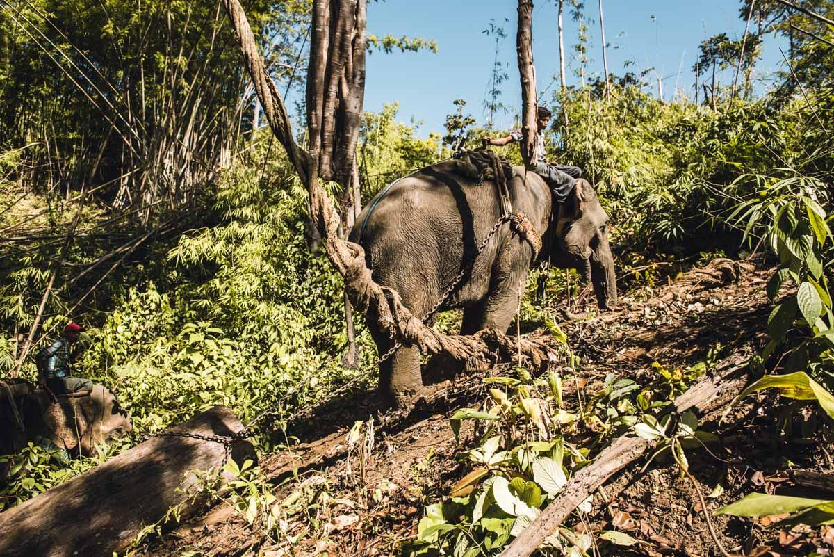 Arbeitselefanten Myanmar