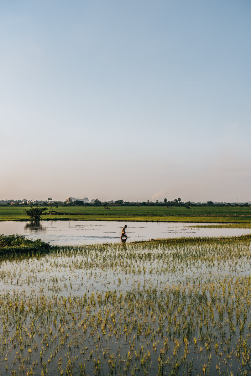 Reisfelder Hpa an