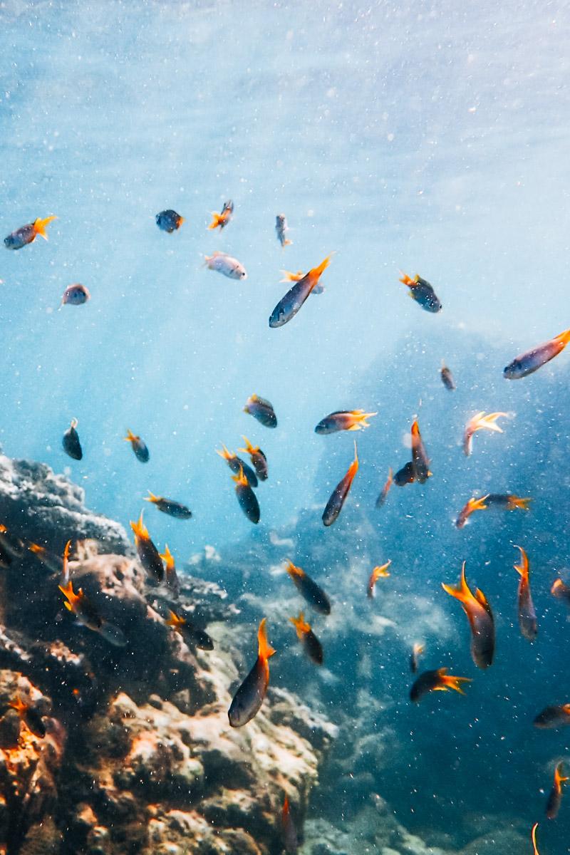 Unterwasserwelt Ngapali