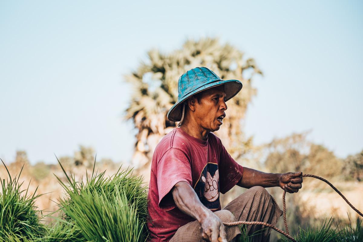 Landwirtschaft Myanmar