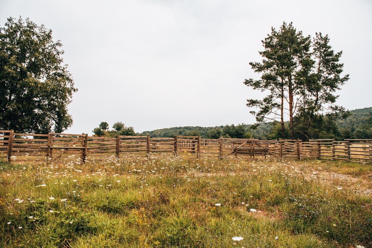 Przewalski Pferde Aschaffenburg