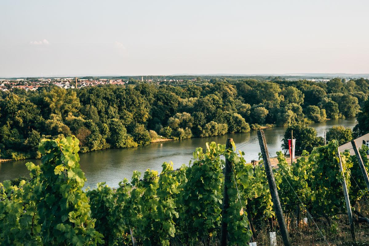 Weinberge Schweinfurt