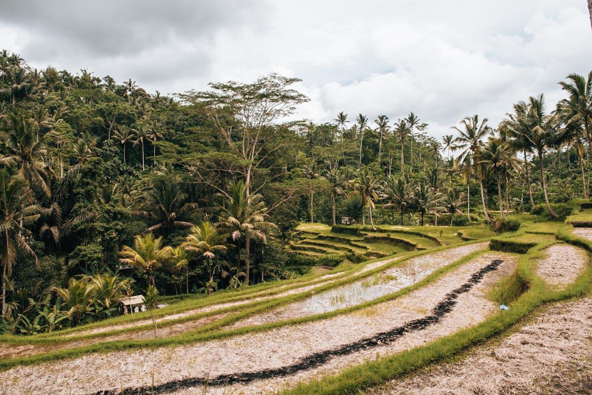Bali Ausflug Tipps