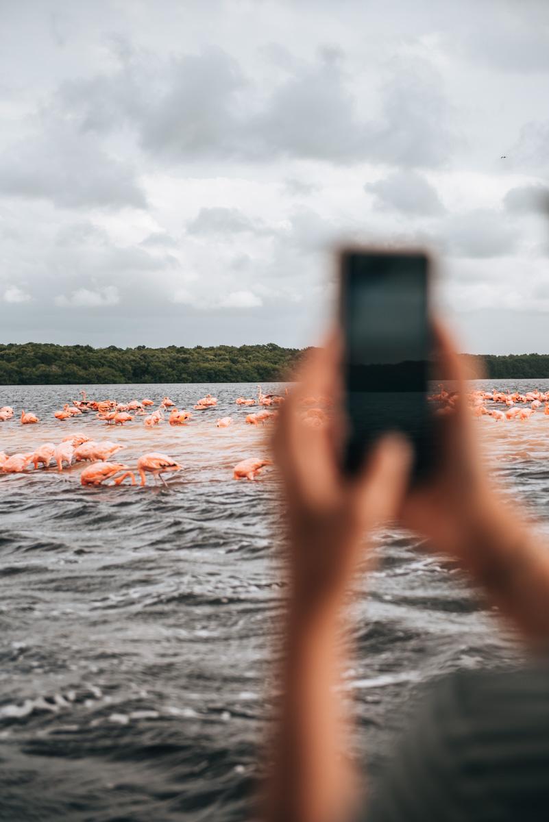 Celestun Flamingos Tips