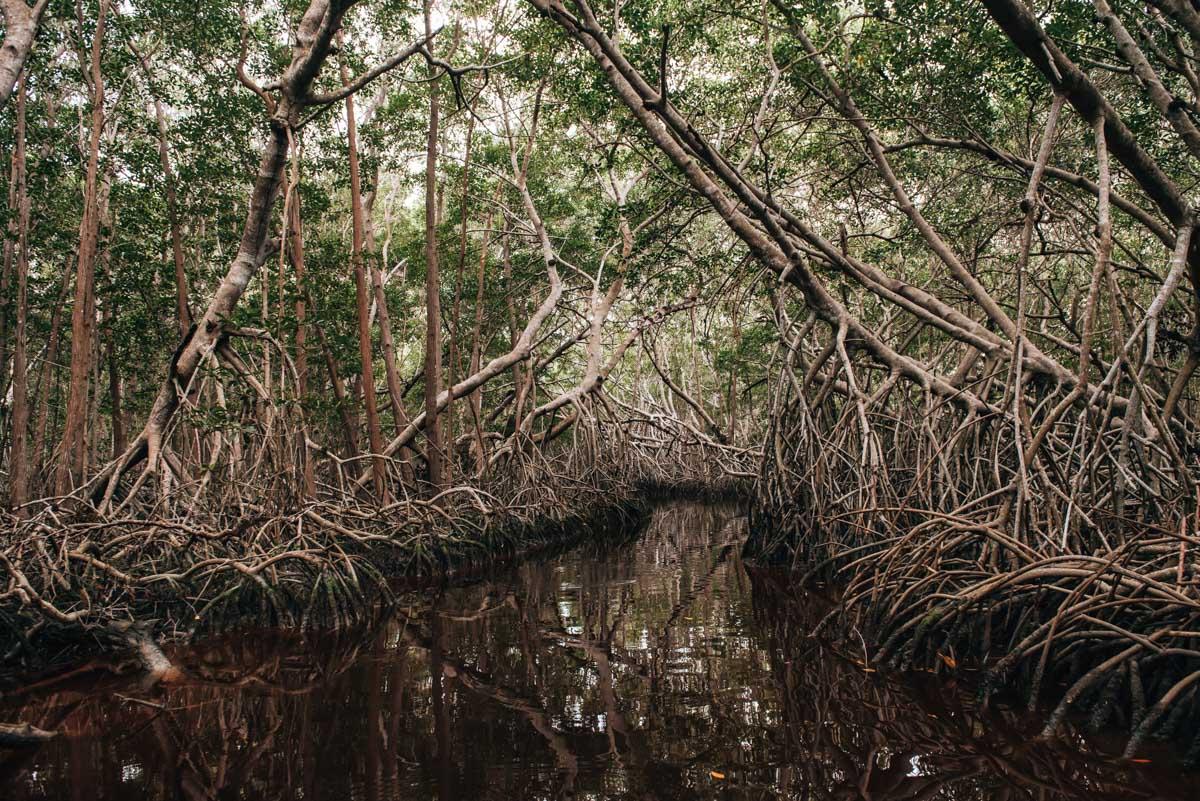 Celestun Mangroven