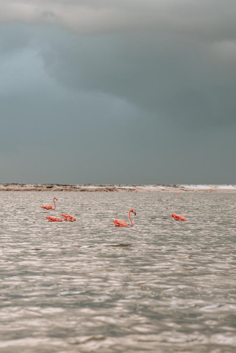 Flamingos Yucatan