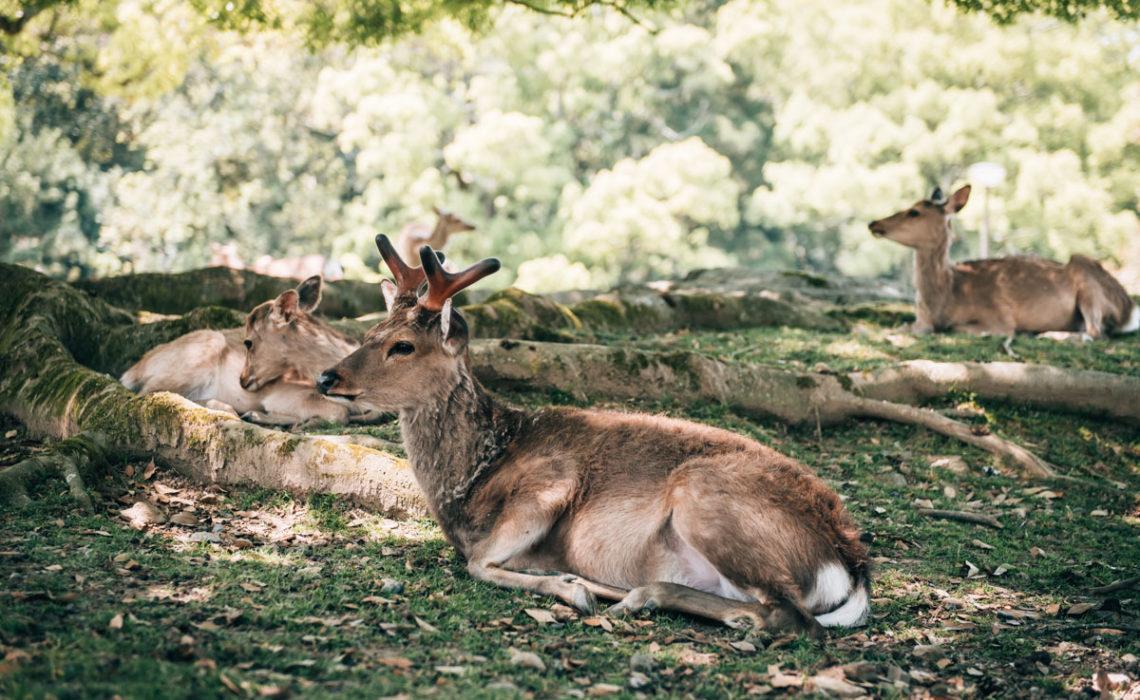 Nara Tipps