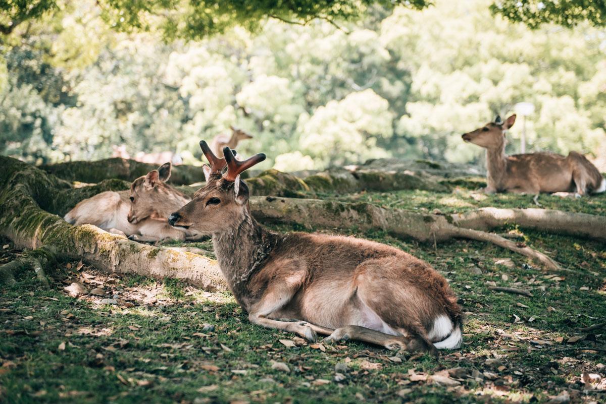 Nara Travel Tips
