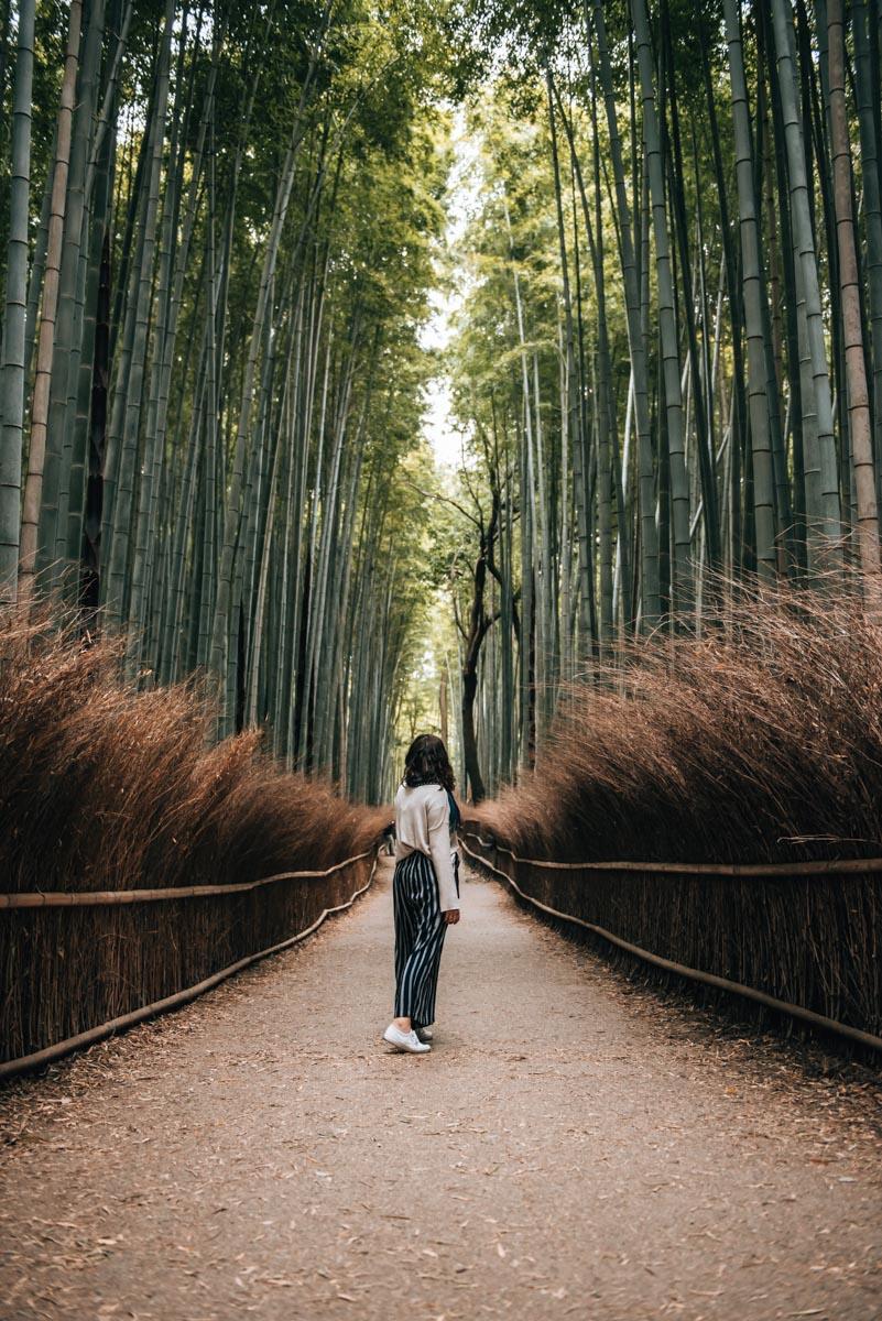Bambuswald Kyoto