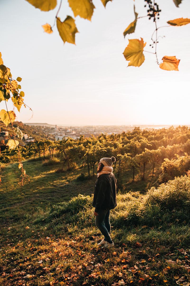Schreckberg Krems Tipps