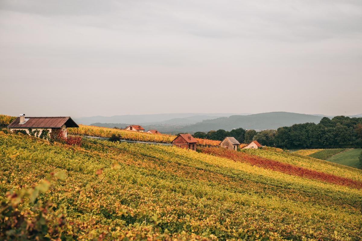 Weinland Franken Herbst