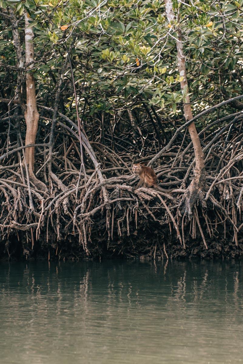 Krabi Mangroven