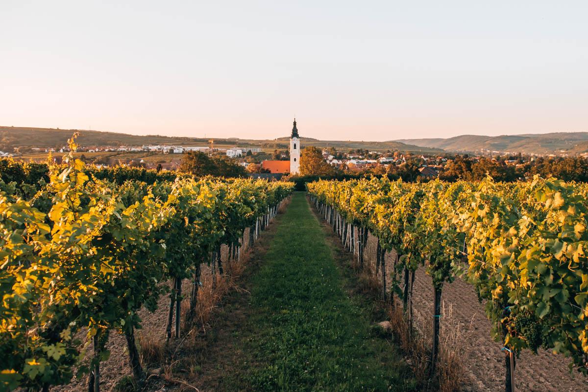 Sommerfrische im Kamptal: Wandern, Winzer & unsere Tipps