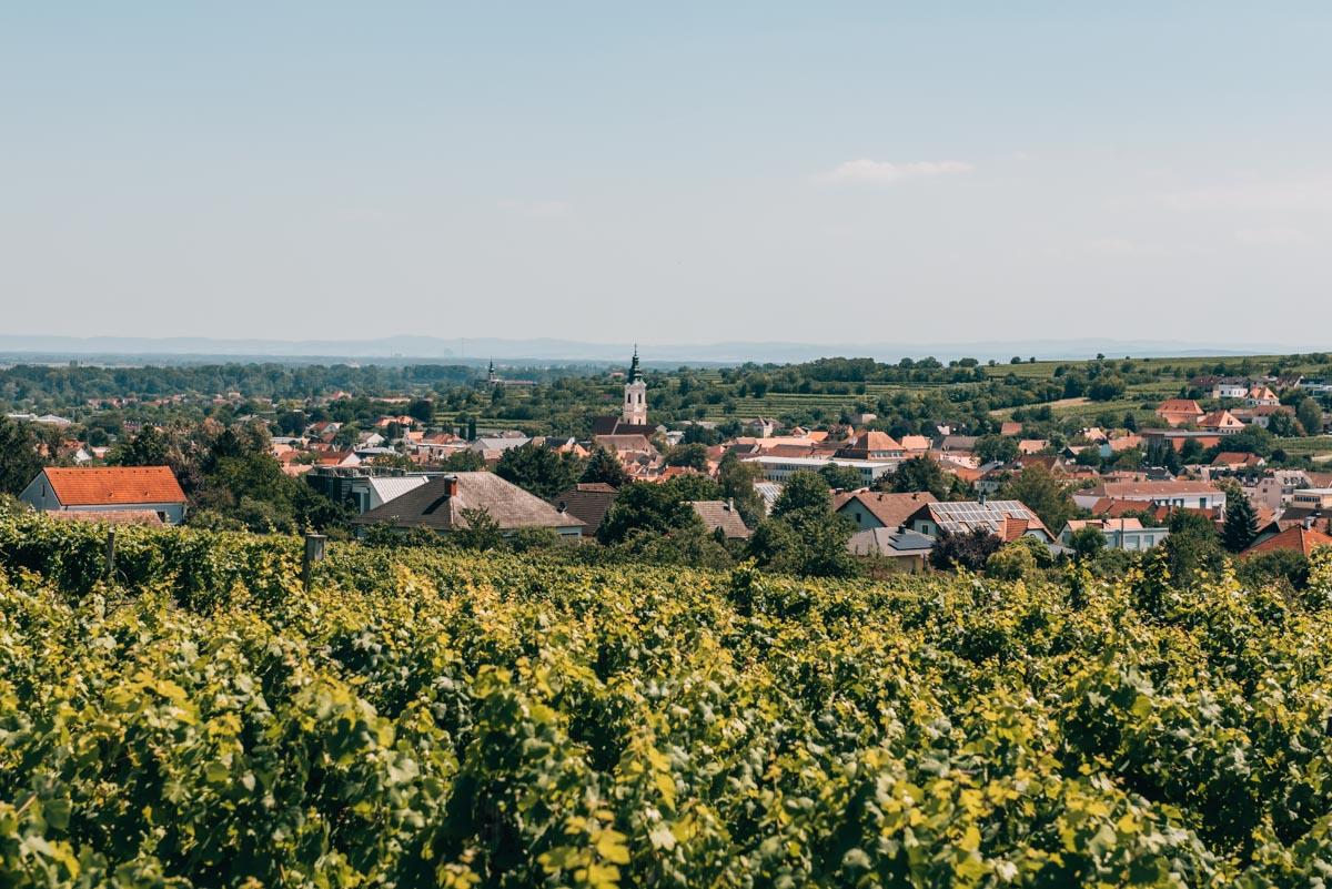 Langenlois Weinwandern