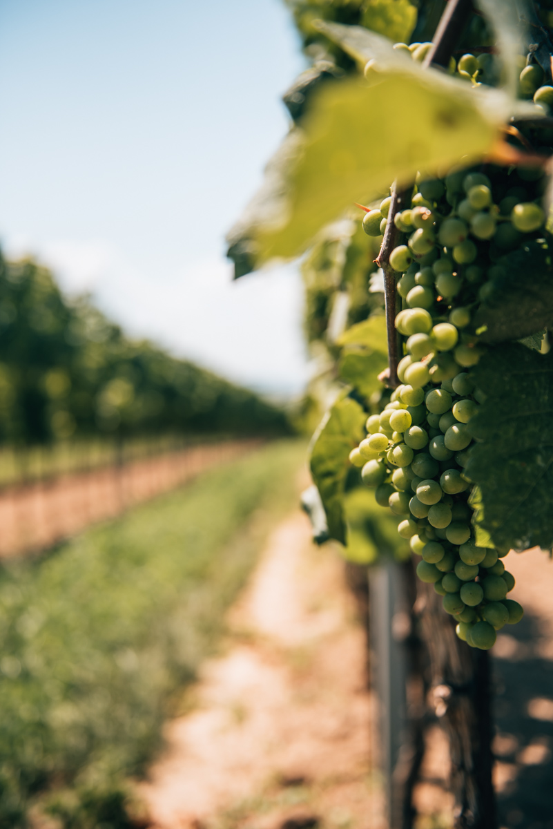 Weinwanderung Langenlois