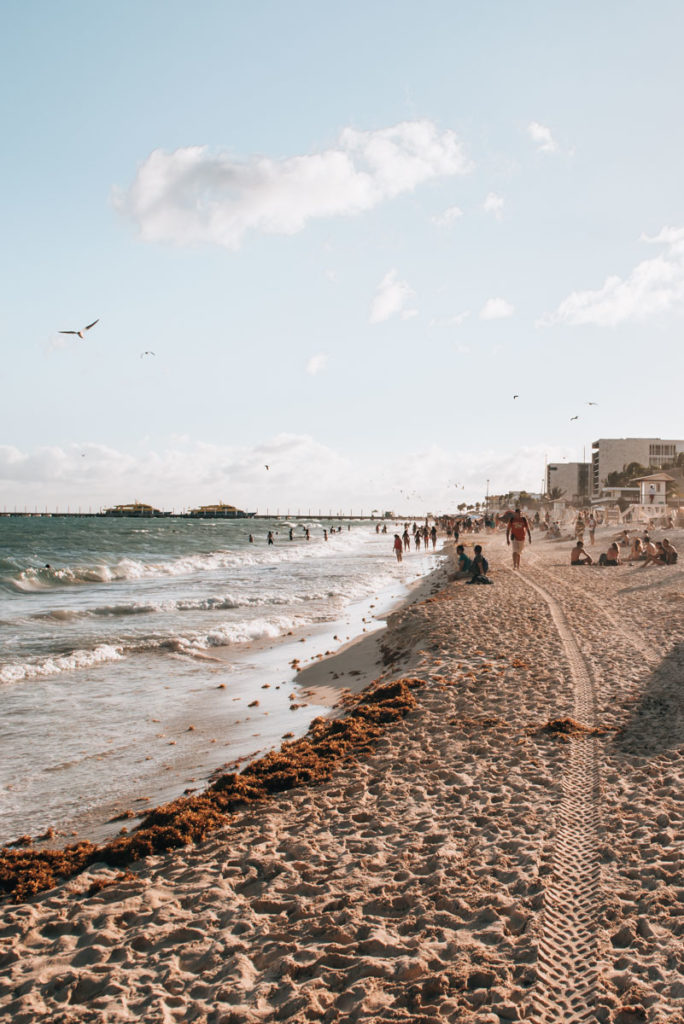 Playa del Carmen Seegras