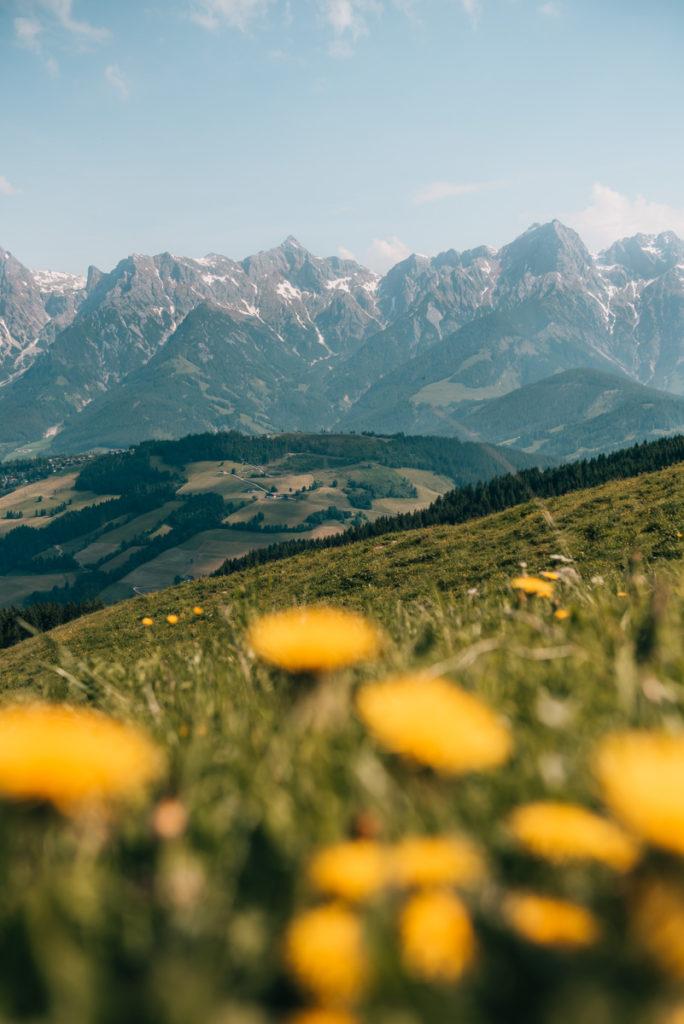 Hochkönig Blumenwiese