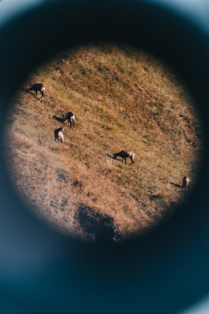 Wildtierbeobachtung Osttirol