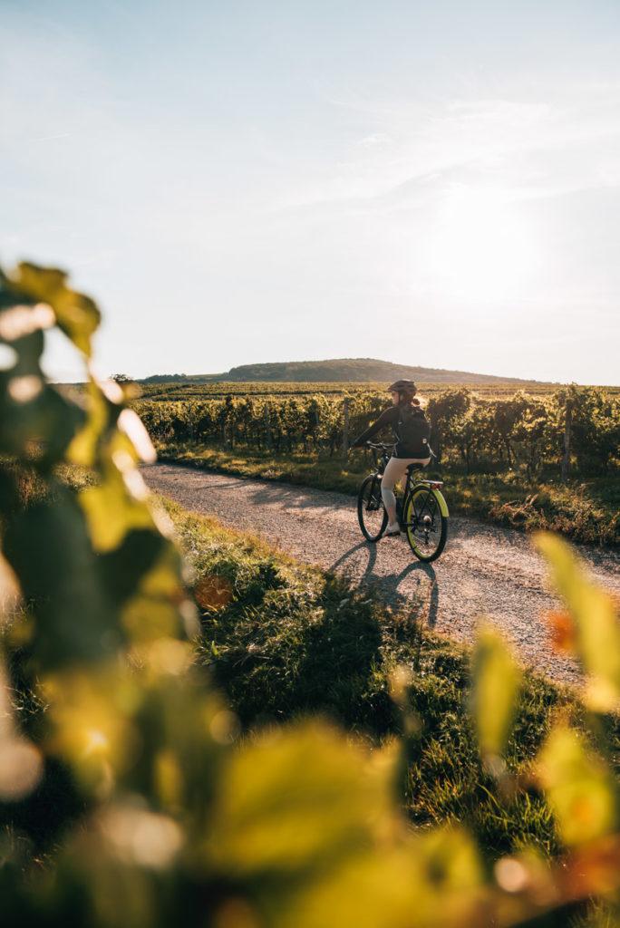 Weinviertel Radfahren